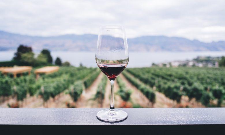 Photo of De lekkerste budget wijnen!