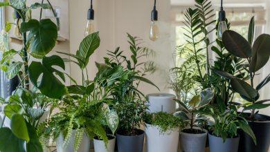 Photo of Zo maak je kamerplanten nog mooier