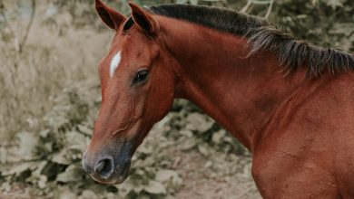 Photo of Verjaardagstip voor kinderen: paarden speelgoed