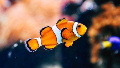 Photo of Het beste voer voor je aquariumvissen