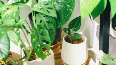 Photo of Slimme interieurtip: leuke planten!
