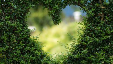 Photo of Waar moet ik op letten bij het zoeken naar een goede boomverzorger?