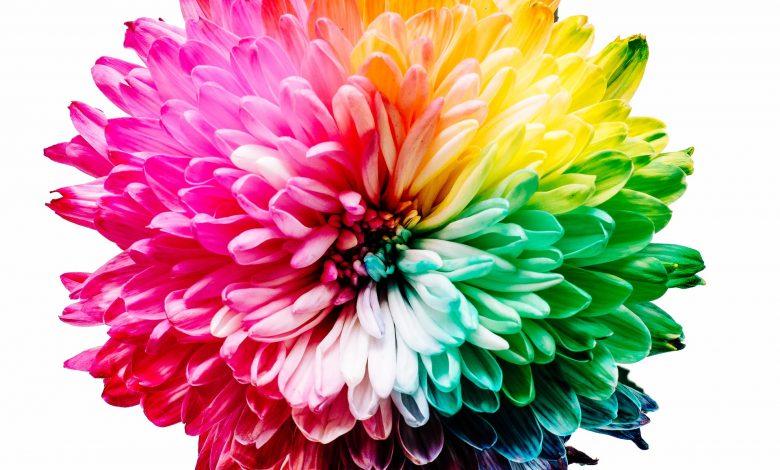 Photo of Een snelcursus kleurcodes herkennen